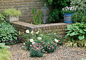 HOSTAS IN GRAVEL SURROUND RAISED BRICK POND & FOUNTAIN IN THE Sun ALLIANCE / AMATEUR Gardening GARDEN. Designer: GEOFF WHITEN. CHELSEA 97