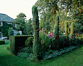Allee mit Säulen-Wacholder vor dem Haus , Beet eingefasst mit Lamium (Taubnessel) 190004860