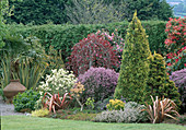 Mixed PLANTING of CONIFERS & WEEPING COPPER BEECH with PIERIS 'FOREST FLAME'. LAKEMOUNT, CO.CORK.