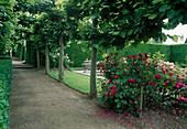 Linden-Allee mit Buchs-Hecke und Rosen