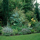 Beet mit Salvia (Salbei), Macleaya cordata (Federmohn), Kniphofia 'August Yellow' (Fackellilie) 9615.5 +
