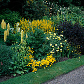 Yellow BORDER: Lupinus 'CHANDELIER', Lysimachia PUNCTATA, ARGYRANTHEMUM 'Jamaica PRIMROSE', NICOTIANA. WOLLERTON Old HALL,SHROPSHIRE