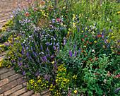 Wildblumenbeet mit Majoran, Origanum vulgare, Carex conica 'Snowline' (Segge), roter Baldrian, Campanula rotundifolia (Glockenblume), Sedum (Fetthenne), Veronica (Ehrenpreis)