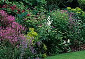 Geranium maderense (Madeira-Storchschnabel), G. Psilostemon-Hybride 'Ann Folkard' (Armenischer Storchschnabel), Rosa (Rosen), Penstemon 'Blue Springs' (Bartfaden) , Euphorbia (Wolfsmilch) , Campanula (Glockenblume)