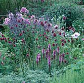 Allium sphaerocephalon (Zierlauch), Liatrus spicata (Prachtscharte), Eryngium, Phlox 'Franz Schubert'