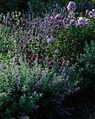 Allium shaerocephalon (Zierlauch), Eryngium dervid (Edeldistel) Phlox 'Farnz Schubert'