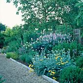 Staudenbeet mit Alchillea 'Moonshine' (Schafgarbe) , Rosa (Rosen), Galega x hartlandii 'His Majesty' (Geißraute), Lupinus (Lupinen)