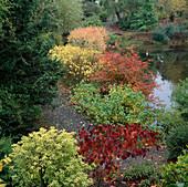 Cercis canadensis 'Forest Pansy'l (Judasbaum), Amelanchier (Felsenbirne), Cornus alba 'Elegantissima' (Hartriegel)