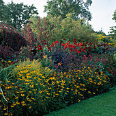 THE Hot BORDER at THE PRIORY, HEREFORD & WORCESTER. RUDBECKIA, PENSTEMON GARNET, DAHLIA 'BISHOP of LLANDAFF, ATRIPLEX A.