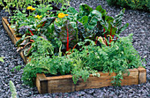 RAISED VEGETABLE BED with CHARD 'BRIGHT LIGHTS', CARROTS 'FERIA' . HAMPTON Court 2000, YOU MAGAZINE, DESIGN by Land Art LTD