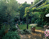 Formal SMALL Town Garden: WISTERIA GROWS On PAINTED Pergola ABOVE BRICK TERRACE, CONTAINERS of CLIPPED Box, SMALL LAWN & FOLIAGE of ROMNEYA & Silver WILLOW On L. Designer: A. Noel