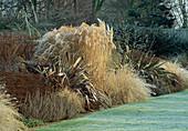 Phormium, Miscanthus (Chinaschilf), Artemisia 'Powis Castle' Pennisetum alopecuroides (Federborstengras), Aster 'Pink Zenith'