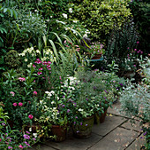 Topfgarten mit Sommerflor