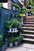 GALVANISED Metal CONTAINERS PLANTED with A VARIETY of CULINARY HERBS Beside an AQUA WALL AND BRICK STEPS. ROBIN Green & RALPH CADE'S Garden, London