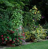 Behälter mit Agave, Abutilon 'Canary Bird' (Schönmalve), Bidens Aurea, Cordyline und roten Pelargonien