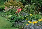 Tulipa 'Mariette', 'West Point', Chaerophyllum hirsutum roseum, Hosta (Funkie)