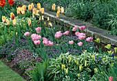 Tulipa 'Humming Bird', 'Angelique', 'Mona Lisa', 'Hermione', 'Queen Wilhelmina' (Tulpen), Hosta (Funkien) und Myosotis (Vergissmeinnicht)