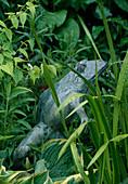 CAROLYN HUBBLE'S SHROPSHIRE Garden: MARBLE FROG by TSAO CHAU YAU at Pool EDGE with IRISES AND WATERLILIES