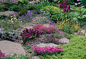 Rock Garden with GENTIANA, AQUILEGIA,THYMUS AND ROSCOEA. THE ALPINE Garden SOCIETY'S 'MAGIC of THE MOUNTAINS' DESIGNED by M. UPWARD / R. MERCER. CHELSEA 2000.