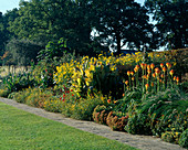 Big HERBACEOUS BORDER IN LATE SUMMER at THE RHS Garden, WISLEY, Surrey, with Canna STRIATA AND KNIPHOFIA 'ROOPERI' IN THE FOREGROUND