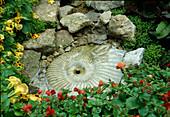 Mimulus (Gauklerblumen) um Wasserspiel