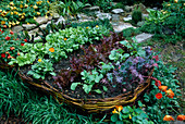 RAISED WICKER BED IN CHILDRENS Garden PLANTED Like A BOAT with CARROTS, SWISS CHARD, CHIVES, LETTUCE, RADISH, SPRING ONIONS, MARIGOLD AND STRAWBERRIES. CHELSEA FLOWER Show