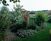 LAUNA SLATTER'S Garden, OXFORDSHIRE: GAZEBO BORDER with STACHYS BYZANTINA, ONOPORDUM ACANTHIUM, Red ROSES AND Centaurea HYPOLEUCA