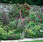 Geranium 'Ann Folkard', Penstemon 'Husker's red', Digitalis purpurea, Rosen 'William Shakespeare' und 'Tuscany Superb'