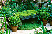 MEDIAEVAL APOTHECARY'S Garden with WICKER Screen, THYME SEAT, Box BALLS IN POTS, FOXGLOVES AND Crushed SHELL MULCH. CHELSEA 2001, BRIGHTSTONE & DISTRICT HORTICULTURAL SOCIETY