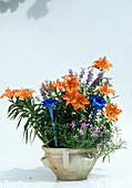 Lilium asiaticum 'Orange Pixie' (Lilien), Isotoma axillaris syn. Laurentia