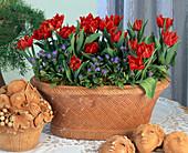Tulipa-HYBR., MYOSOTIS sylvatica