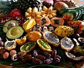 EXOTEN Aussäen:VON links oben:Ananas,Süßkar-