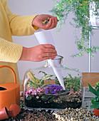 8. Step: Flaschengarten Bepflanzen