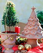 Myrtus communis / Myrte, weihnachtlich dekoriert