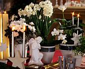 WEIßE Weihnacht: AZALEA, Tazettnarzissen, PHALAENOPSIS, Zandesdeschia / Zimmerka