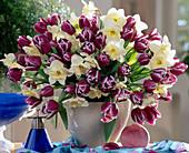 Tulipa 'Arabien MYSTERY',