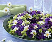 Sommerkranz: Delphinium (Rittersporn), Argyranthemum