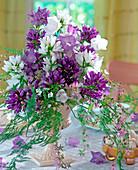 Strauß aus diversen Glockenblumen: Campanula glomerata -