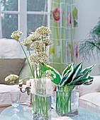 Allium nigrum (Zierlauch), Hosta (Funkienblätter)