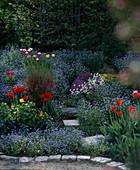 Frühlingsbeet mit Vergißmeinnicht und Tulpen