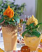 Gelbes Arrangement mit Celosia argentea