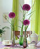 Allium aflatunense (Zierlauch)