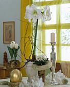 Hippeastrum-Hybride (Amaryllis), Tulipa, Primula (Kissenprimel)