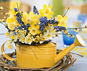 Frühlingsstrauß in kleiner Gießkanne mit Narcissus / Osterglocken 'Minnow' (weiß