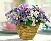 Strauß aus Aquilegia 'Spring Magic' / Frühlingsakelei, Allium / Zierlauch, Myoso