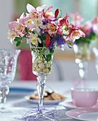 Aquilegia caerulea 'Spring Magic' / Frühlingsakelei in Weinglas