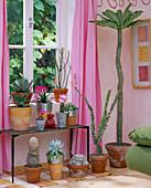 Fensterb. lks: Agave parasana;Euphorbia allandii. Blumenb.:Echino-