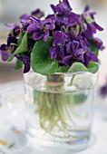 Duftveilchen (Viola odorata) im Glas