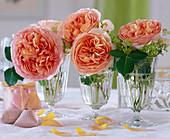 Gläser mit englischen Rosenblüten 'Abraham Darby'