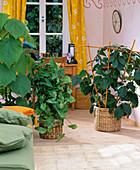Pflanzen als Raumteiler zwischen Wohn- und Arbeitsbereich